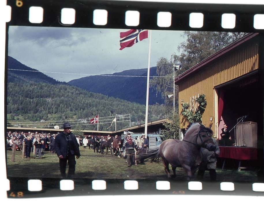 Hestane gjeng på rekke framfor scena.