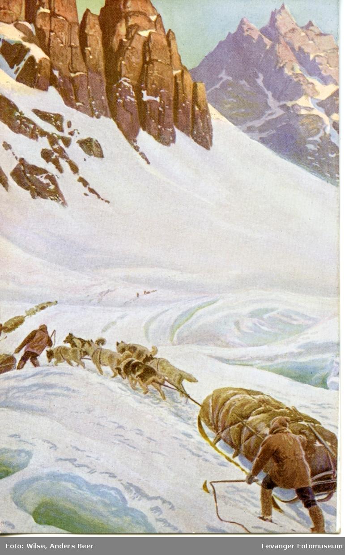 Postkort, vintermotiv sledehunder og pulk i krevende fjelllandskap.