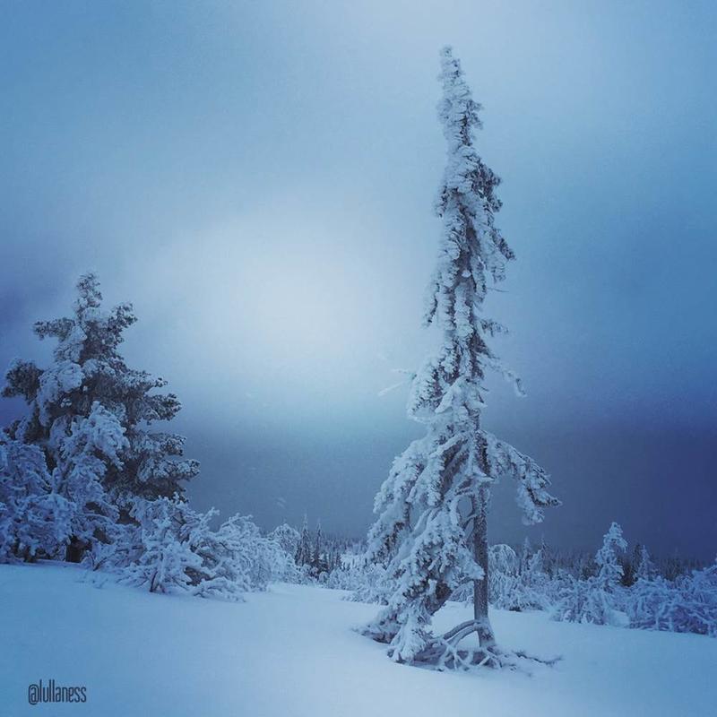 "Novembervinner i fotokonkurransen ""Det fantastiske treet"" tatt i Bittermarka i Trysil."