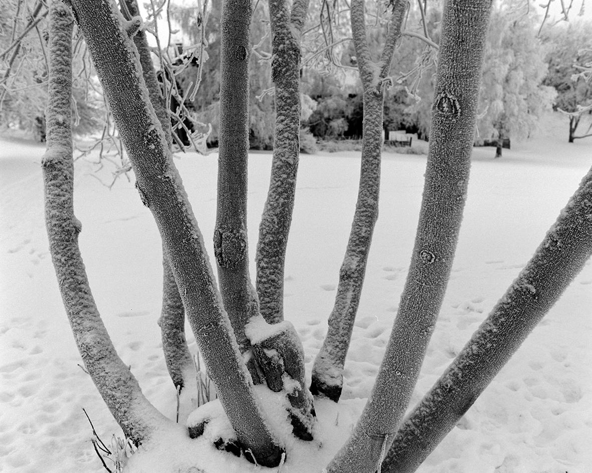 Hedmarksmuseet, Domkirkeodden, vintermotiv, rim, trær.