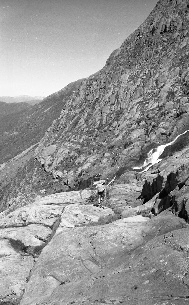 Ålfotbreen sommeren 1966.