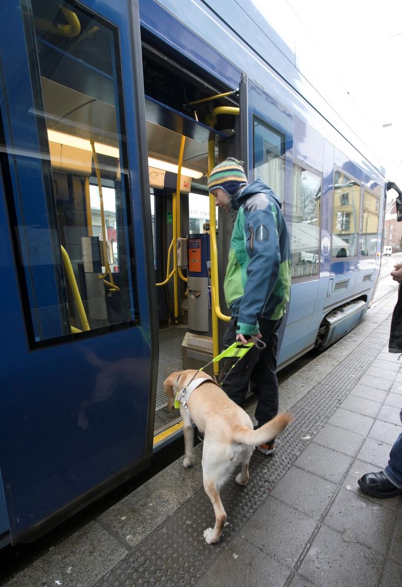 Førerhundskole. Førerhund på treningstur med førerhundtrener i området Majorstuen i Oslo.