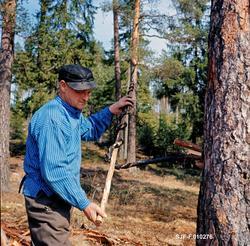 Alf Bjølseth (1896-1990) fra Malungen i Romedal allmenning i