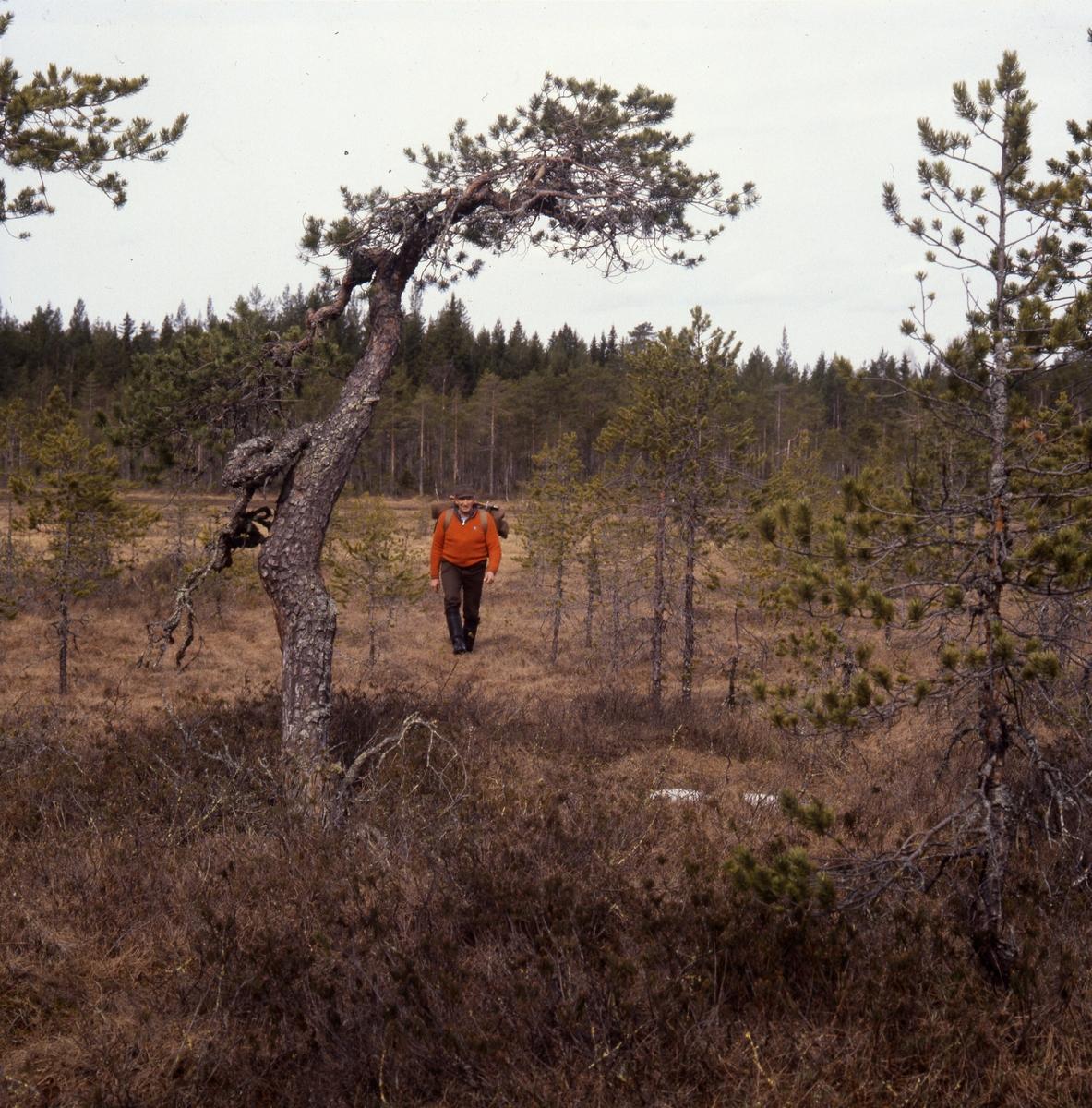 Man med ryggsäck vandrar på en myr.