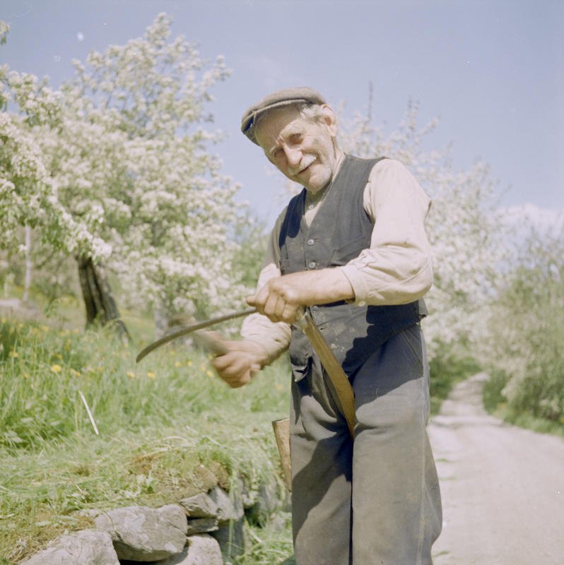 Mann kvesser ljå 1958-59