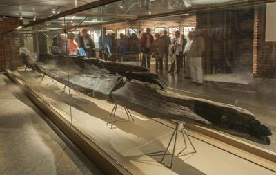 Stokkebåt i monter på museet.