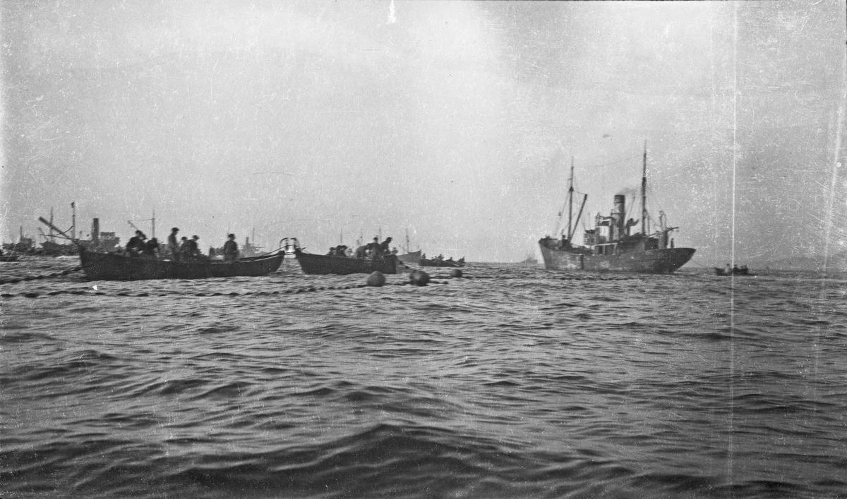 Fiske pågår. Flere robåter i sving med fangstnett. Større skip ligger og venter på fangsten. Hverdagsbilde.