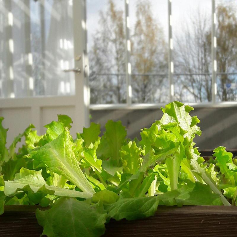 salat_april_17_liten.jpg