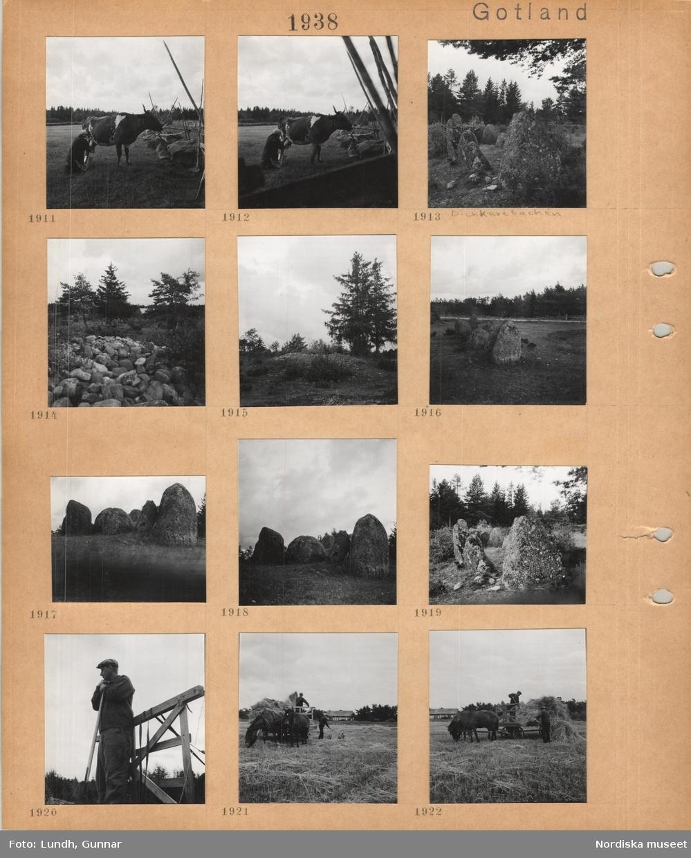 Motiv: Gotland, en kvinna mjölkar en ko i en hage, gärdesgård av sten och trä, stensättning med resta större stenar, Dickkavebacken, med höga träd runt, stenröse, gärdesgård av trä, man i arbetskläder lutar sig mot en högaffel, två män fyller en hästdragen skrinda med hö på ett slaget fält.