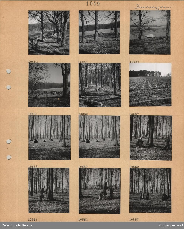 Motiv: Kullabygden, bil kör på landsväg, stengärdsgård, träd, en grupp personer sitter på marken, parkerad bil, bokskog utan löv, åker utan gröda, vuxna och barn plockar vitsippor i bokskog.