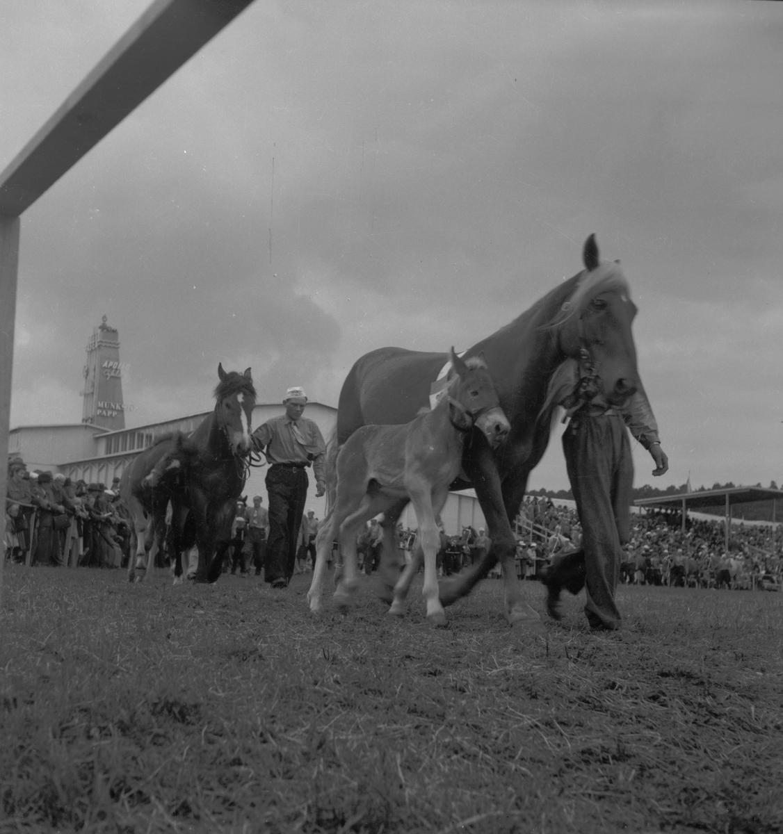 Lantbruksmötet. 1946