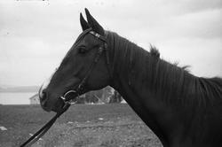 Hest og offiser ved Hærens Hesteskole på Starum. Serie på 12