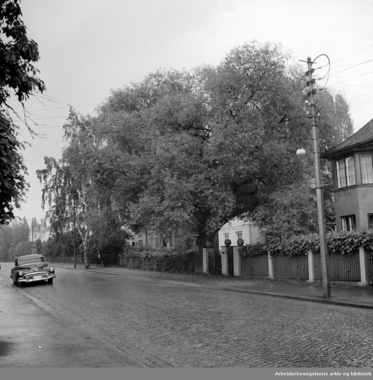 Tidemands gate 11. Juni 1955