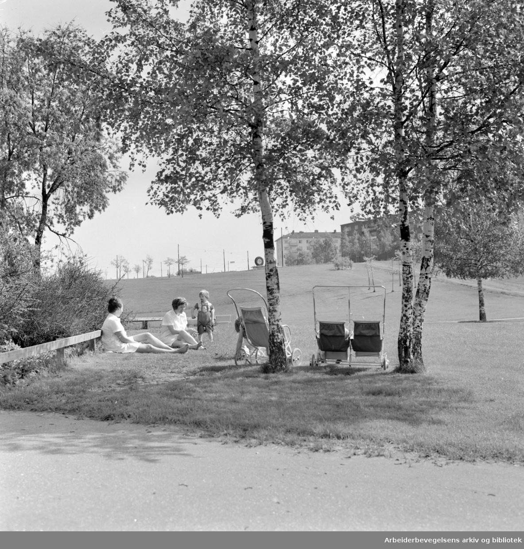 Torshovdalen park. Mai 1963