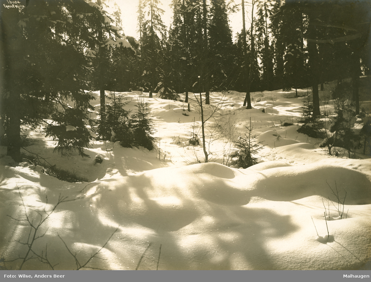 Lillehammer. Skogslandskap i solskinn.