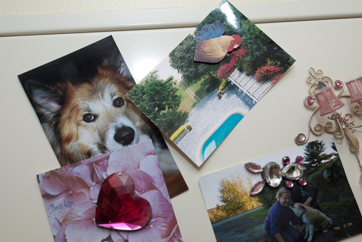 Hjemme hos hunden Romeo. Bilder av Romeo på kjøleskapsdøren.