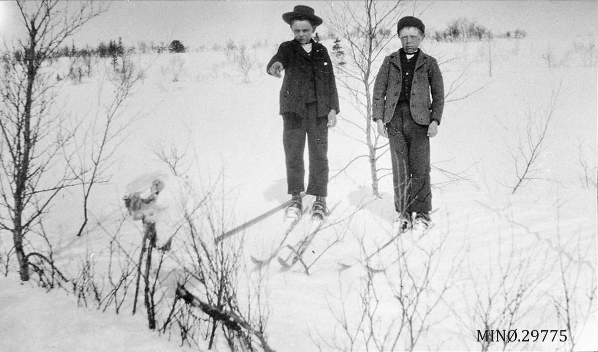 Skiløpere i vinterlandskap.