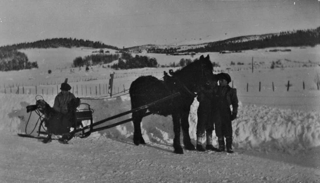 Tre gutter med hest og spisslåe