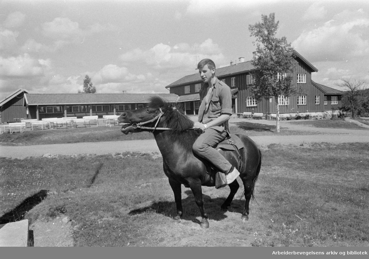 """Nordmarka: Ullevålseter. Langt på landet, men bare en halv time fra byen. Steinbukken """"Tordenskjold"""", geiter og ponnien """"Truls"""", er blant alle de andre dyrene på Ullevålseter. Juli 1966"""