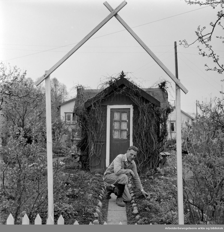 Hjemmets Kolonihage på Bjølsen. Mai 1961