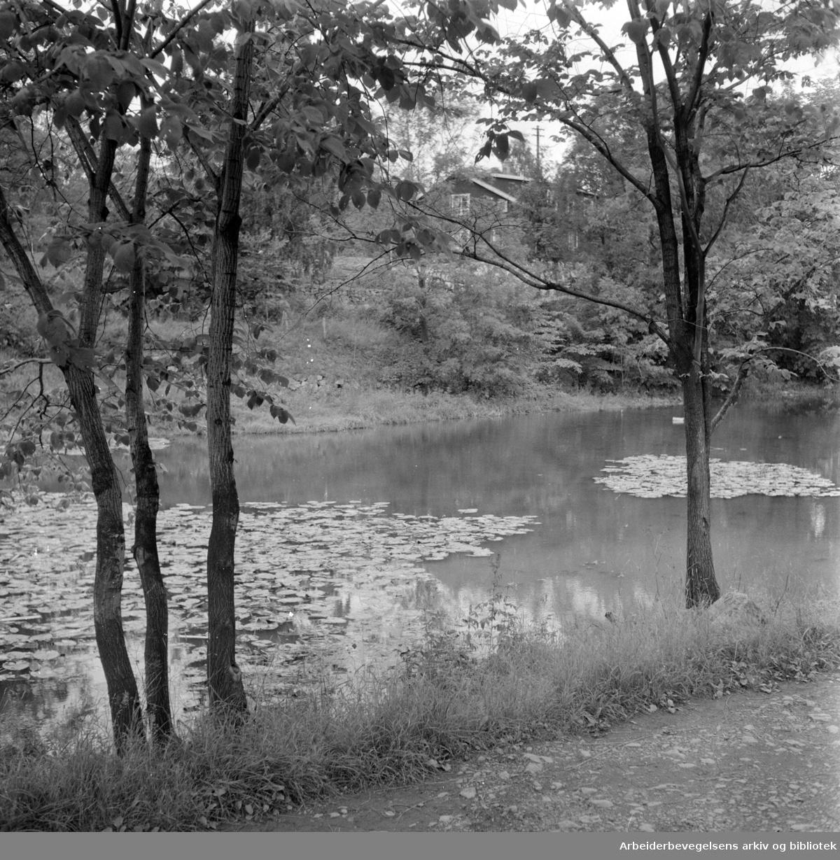 Hoffdammen og Vinderen Hovedgård. September 1957