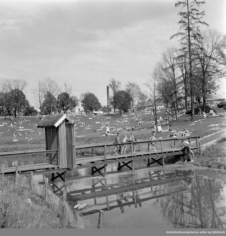 Frognerparken. Gammel bru ved Frognerbadet. August 1957