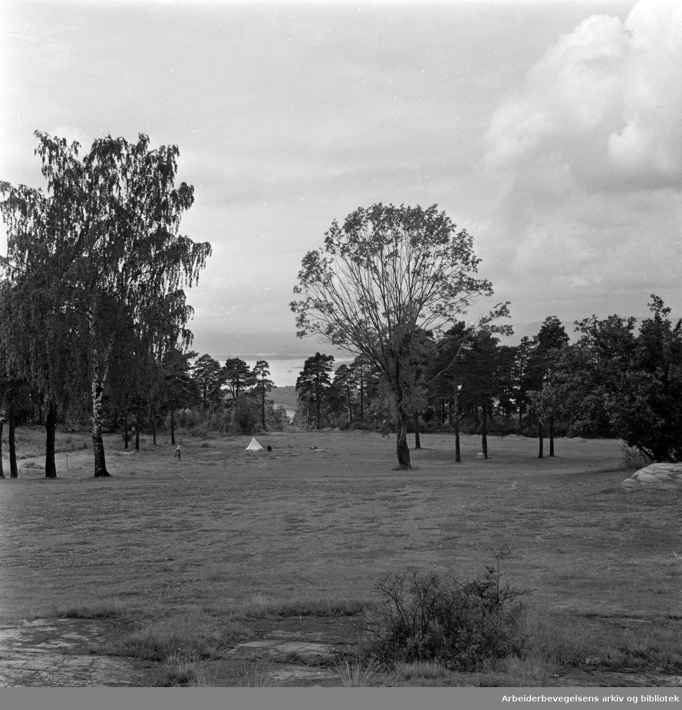 Ekeberg, Hestehagen: Ekebergsletta. August 1962