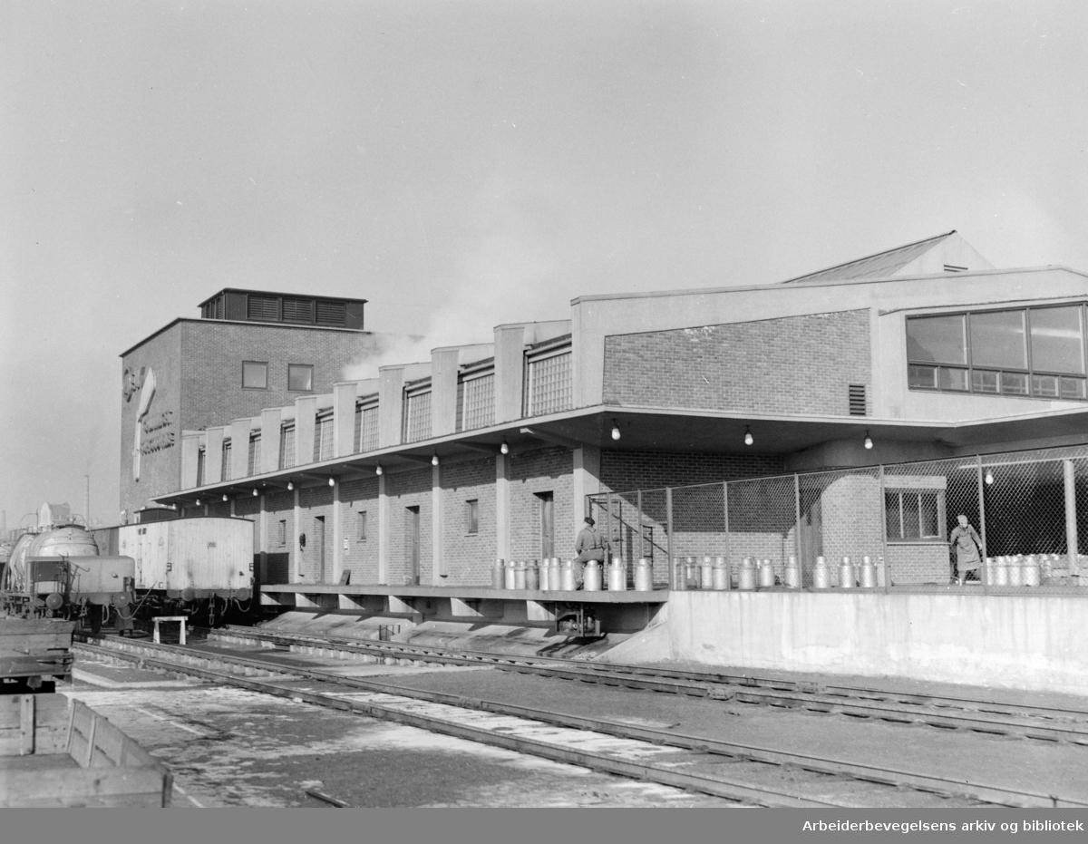 Fellesmeieriet. Motakerstasjonen. Mars 1953