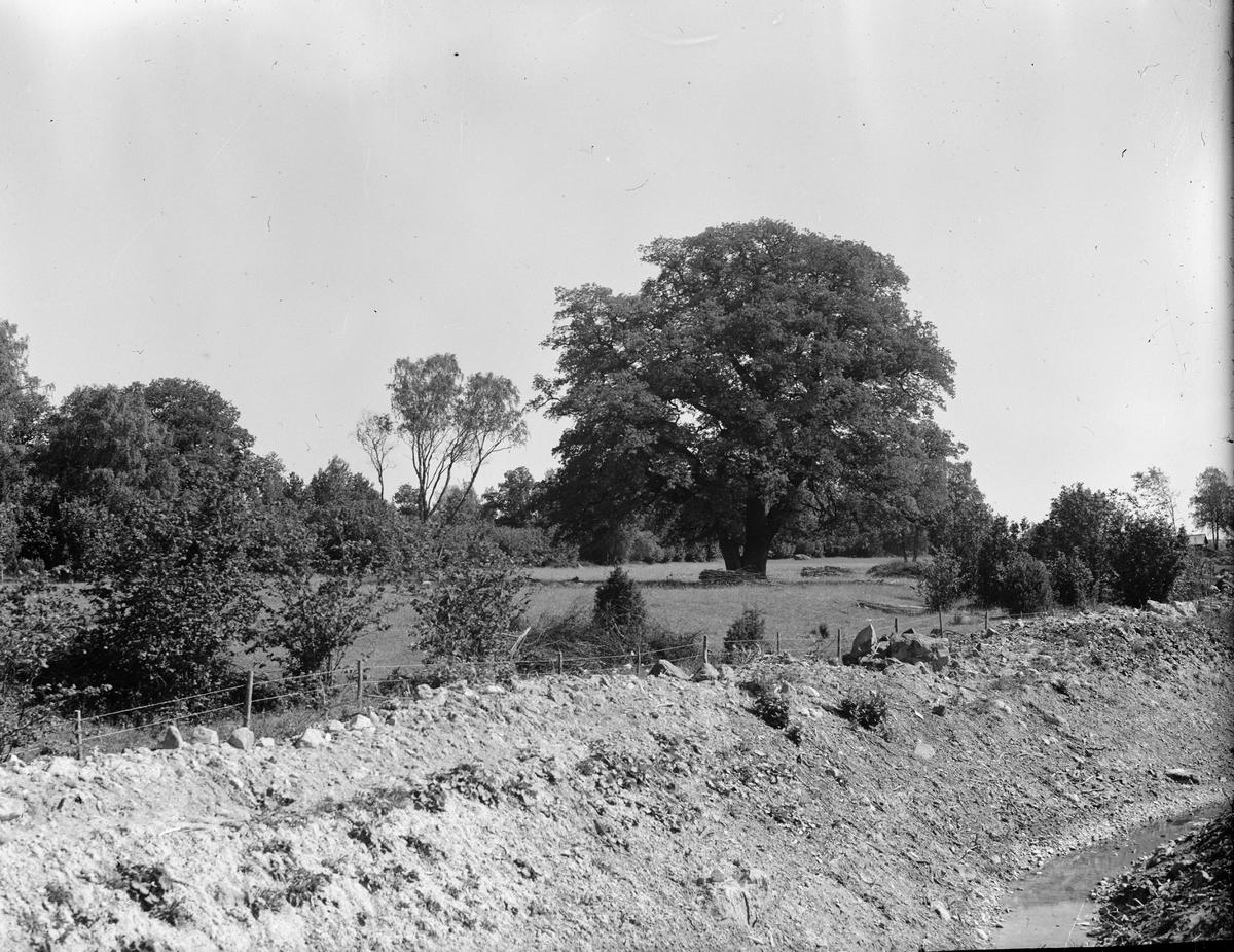 Hagmark, Sätuna gårds ägor, Björklinge socken, Uppland 1930