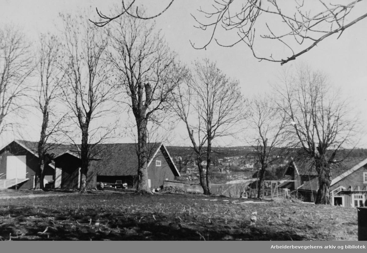 Abildsø. Nordre Abildsø gård. April 1947