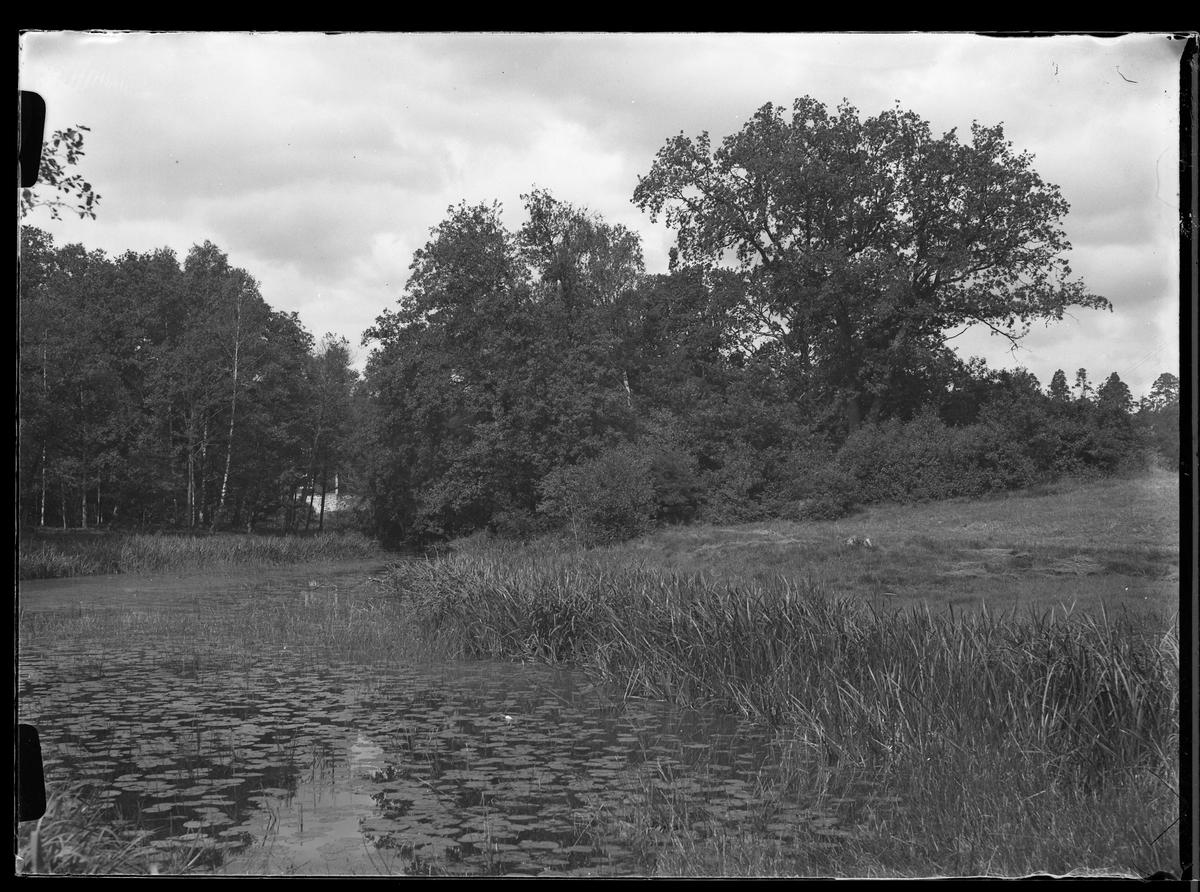 Vattnet i Nolhaga park täckt av näckrosblad.