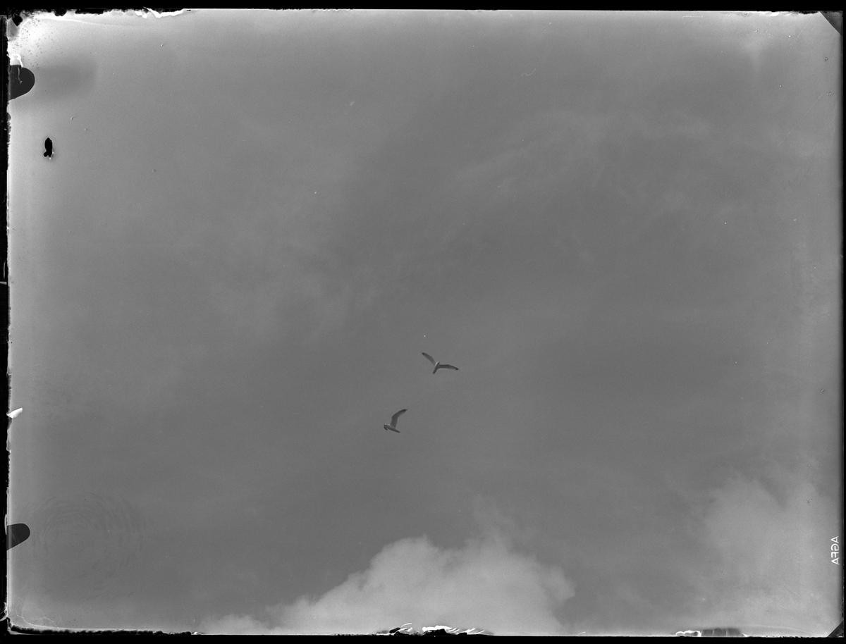 Två flygande måsar.