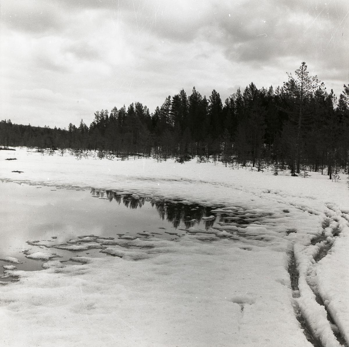 Svag is med menföre vid Degeln på långfredagen 15 april 1960.