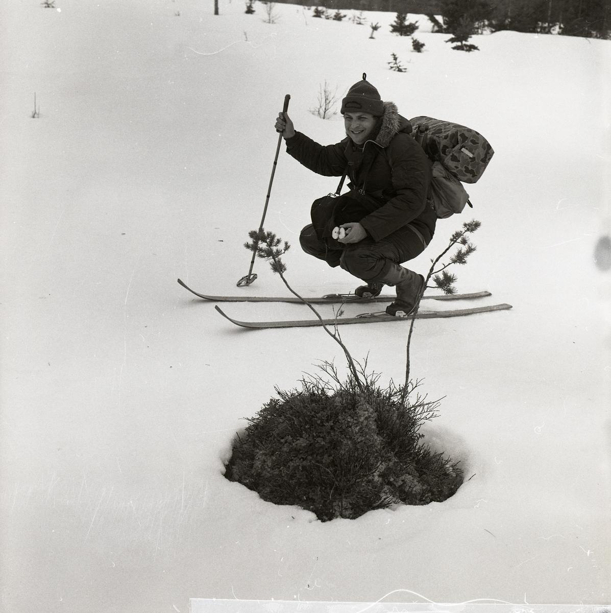 En skidåkare står på huk bredvid en tuva i snön, 1977.