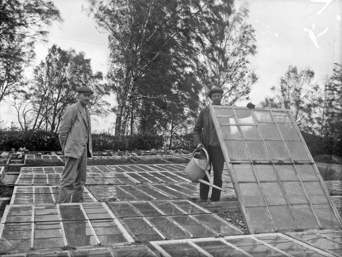 """Trädgårdsmästare Karlsson (till vänster) och Erik """"Lill-Erik"""" Johansson arbetar med drivbänkarna på gården. I arbetet med trädgården ingick även att stå på torget inne i Alingsås för att sälja det som skördats."""