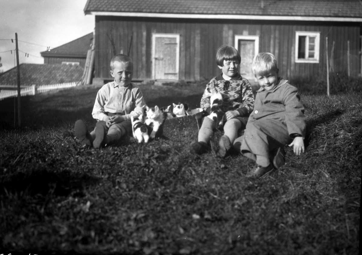 Tre barn med katter i graset.