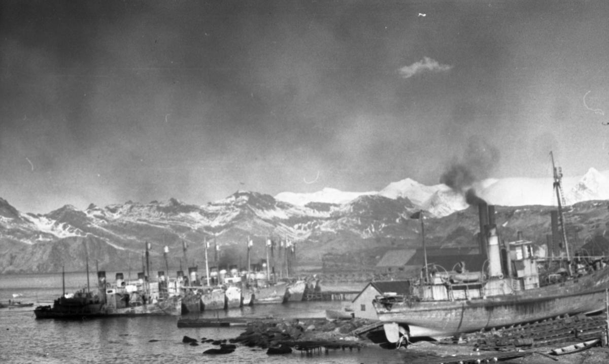 Leith Harbour. Mange skip i havneni. Fjell med snø på toppene. Suderøy på fangstfeltet.