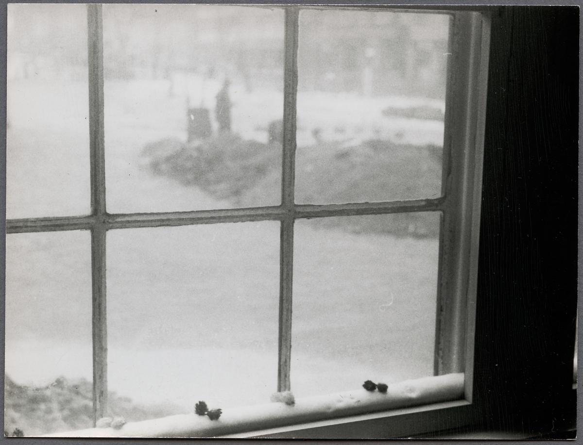 Frostigt fönster med utsikt.