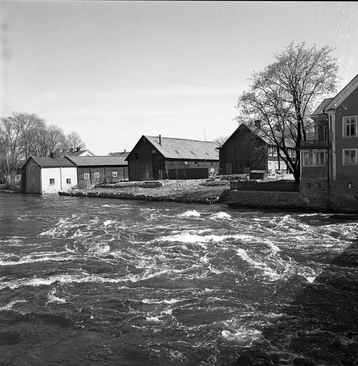 Vårfloden strömmar förbi Garvaregården Högt vatten i Arbogaån