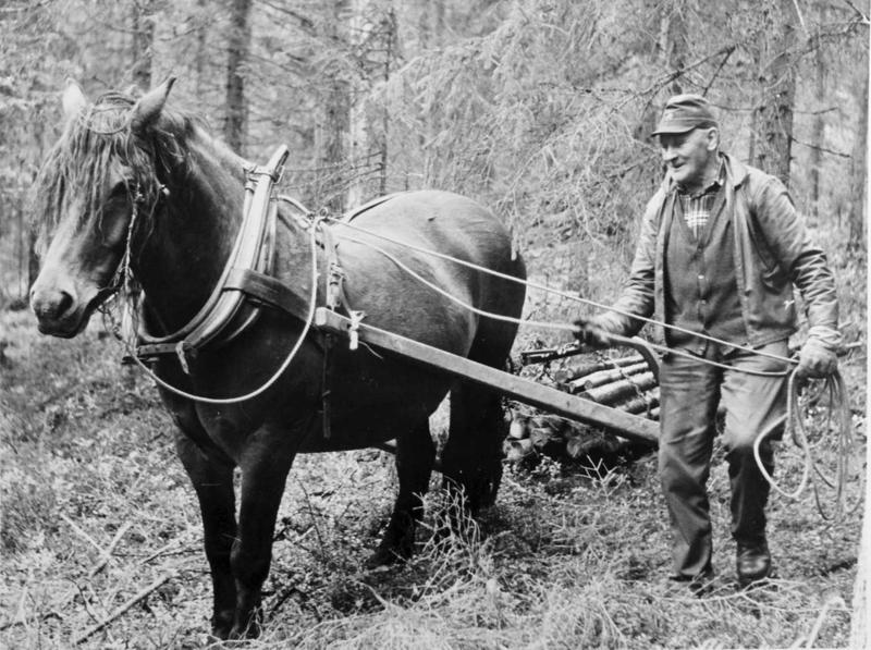 Lunning på barmark med lunningsdrag, hest og kar; stor vending. Andrå, Rendalen.1982. Vedkjøring. Petter Skogholt. MINØ.43877