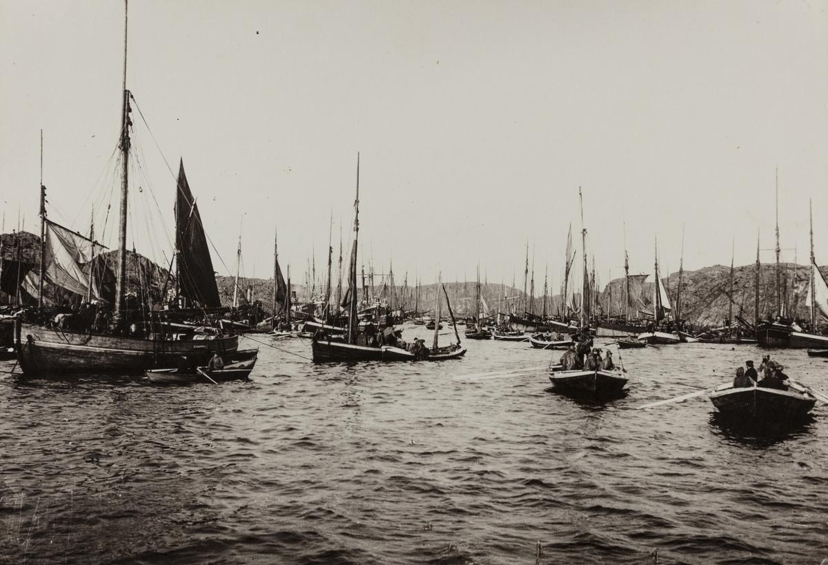 Vårsildfiske omkring 1900.