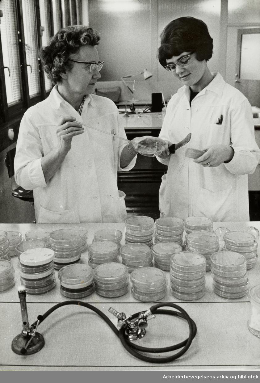 Løren. Statens Slakterilaboratorium. Her tester man kjøttprodukter som skal ut for salg i butikkene. til Januar 1967