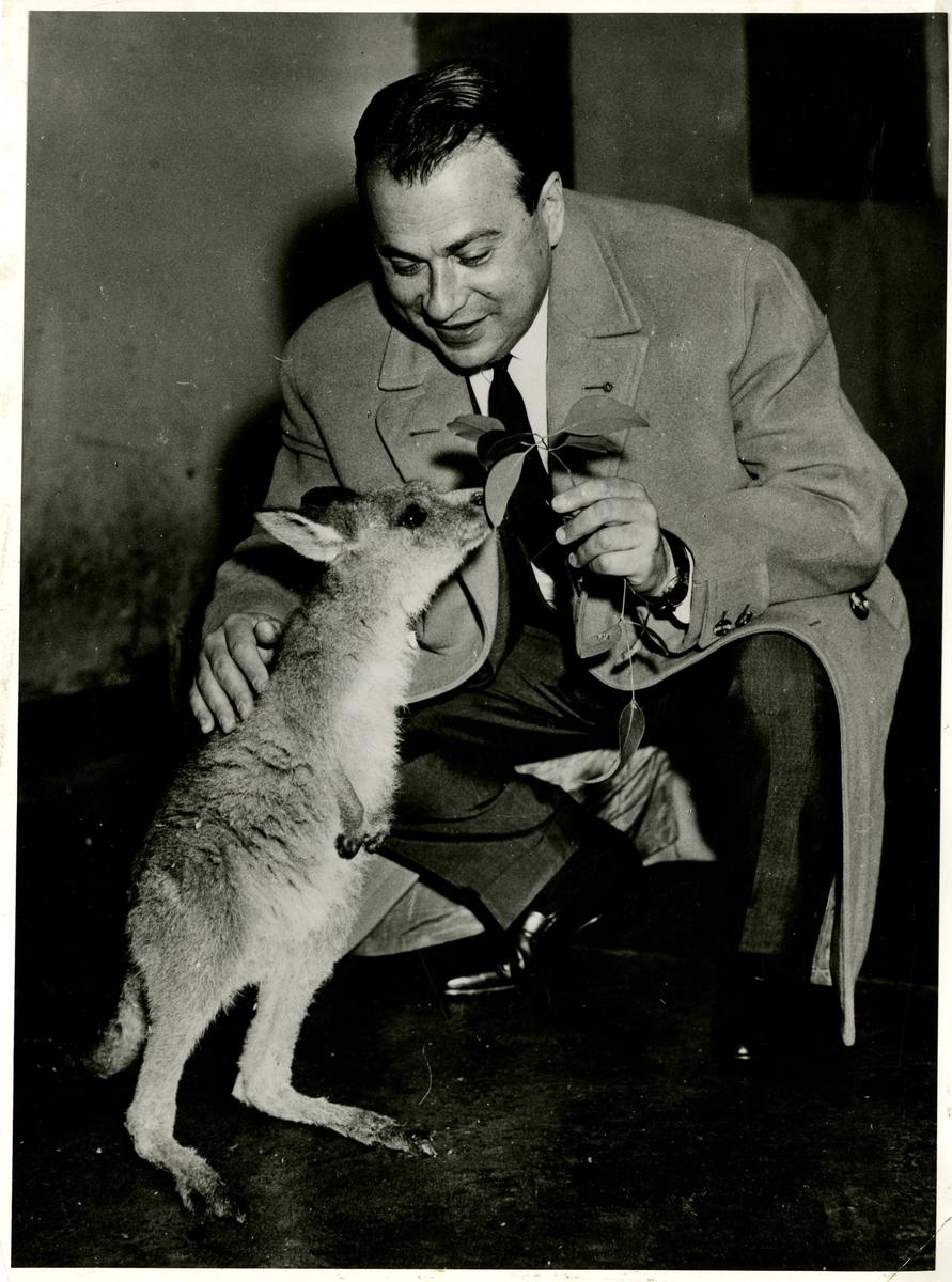 """Fra Olaf T. Ranum's """"kunstnervegg"""". Musiker Henryk Szeryng, avbildet med en kenguru."""