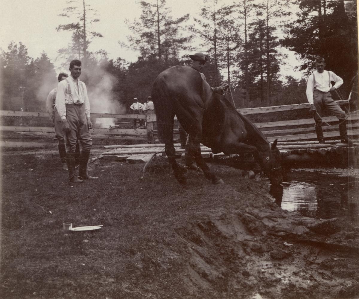 Elever vid Kavalleriskolan i Umeå vattnar hästarna.
