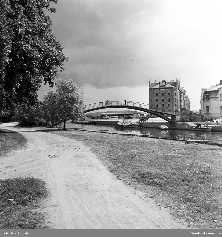 En häst väntar tålmodigt medan vagnen fylls med ved från en pråm i Selångersån alldeles intill Puckelbron.