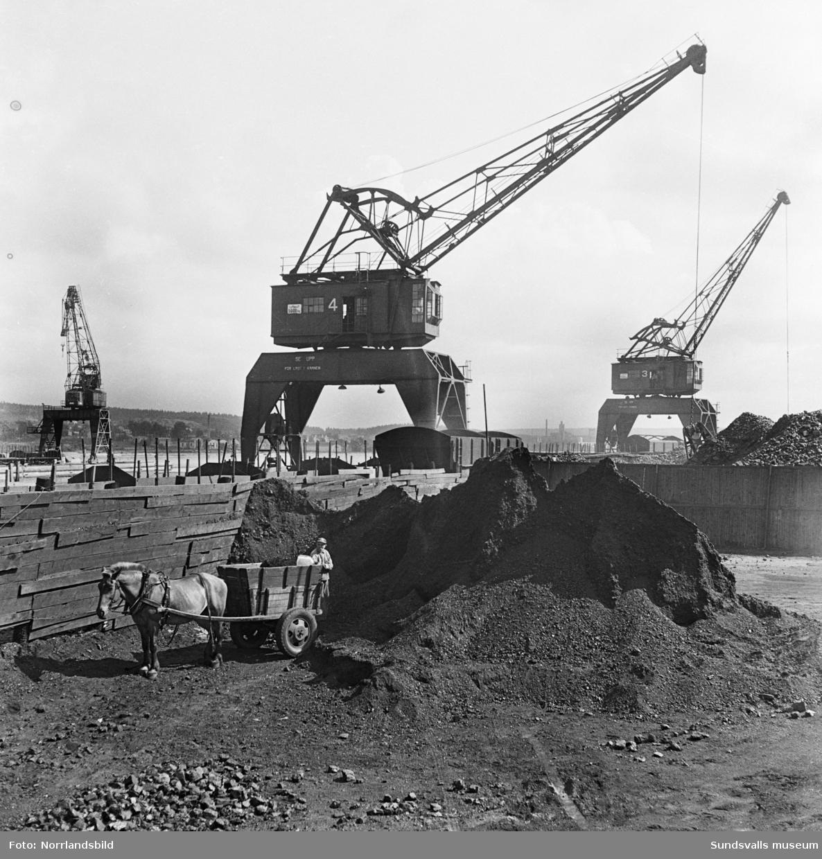 Hästdragen kolkärra lastar i hamnen. I bakgrunden de stora hamnkranarna.