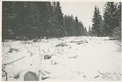 Framnes (6 bilder)
