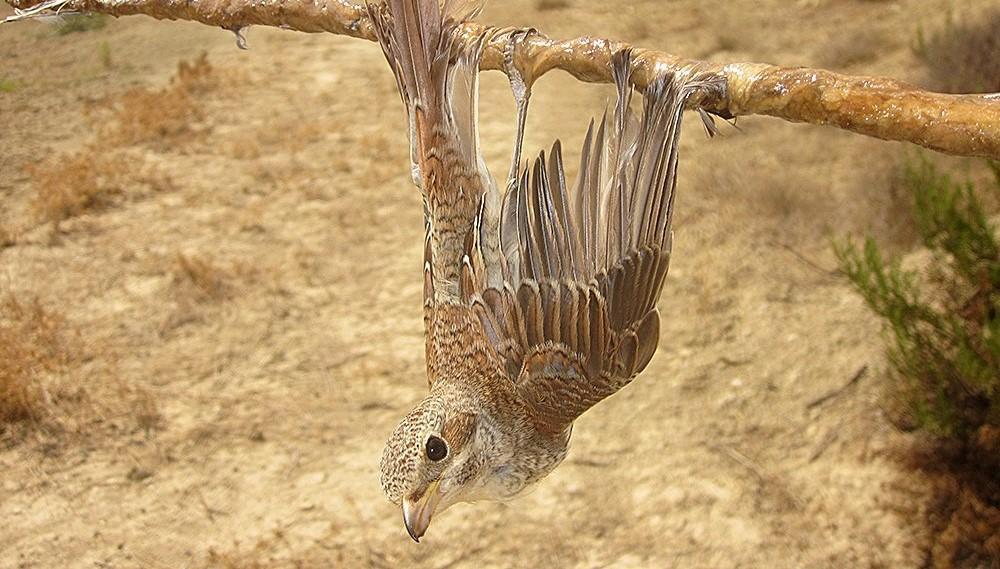 Foto: BirdLife Cyprus / Foto: BirdLife Cyprus