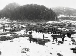 Tømmeropplag på Rambergevja i Tune.  Oppsamling av tømmer fr