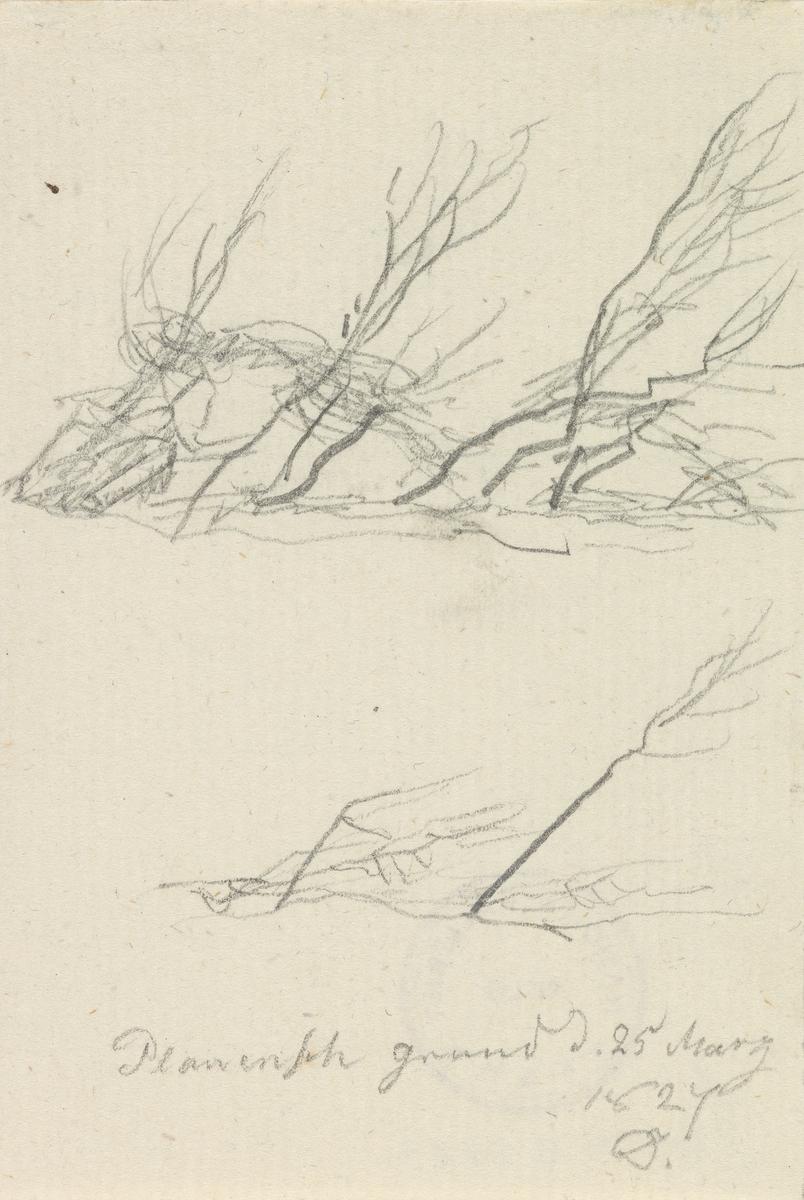 Busker i vind, Plauenscher Grund [Tegning]